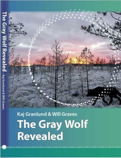 GrayWolfRevealed.JPG