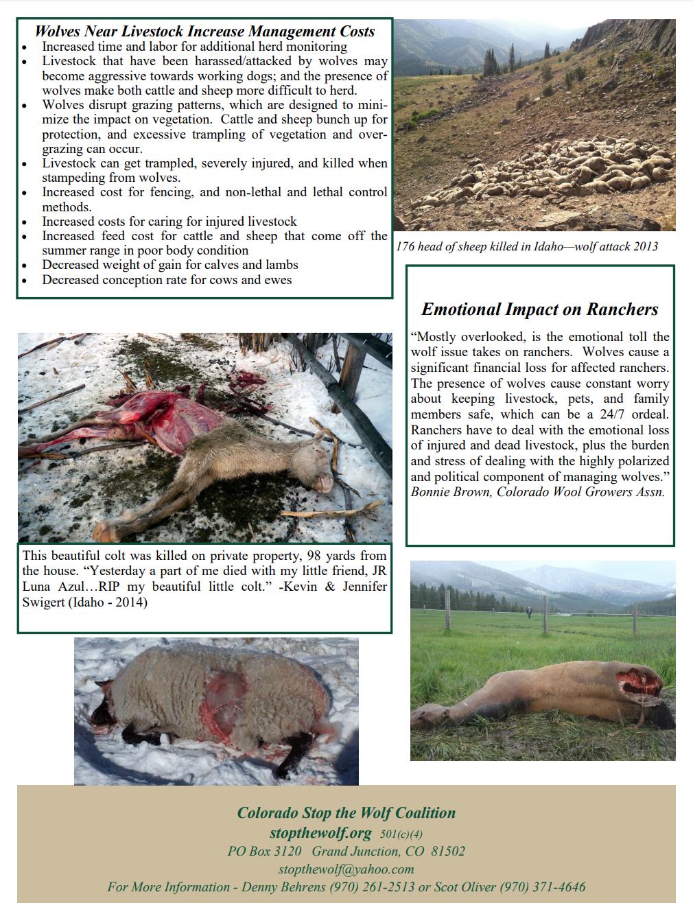 wolves threaten livestock