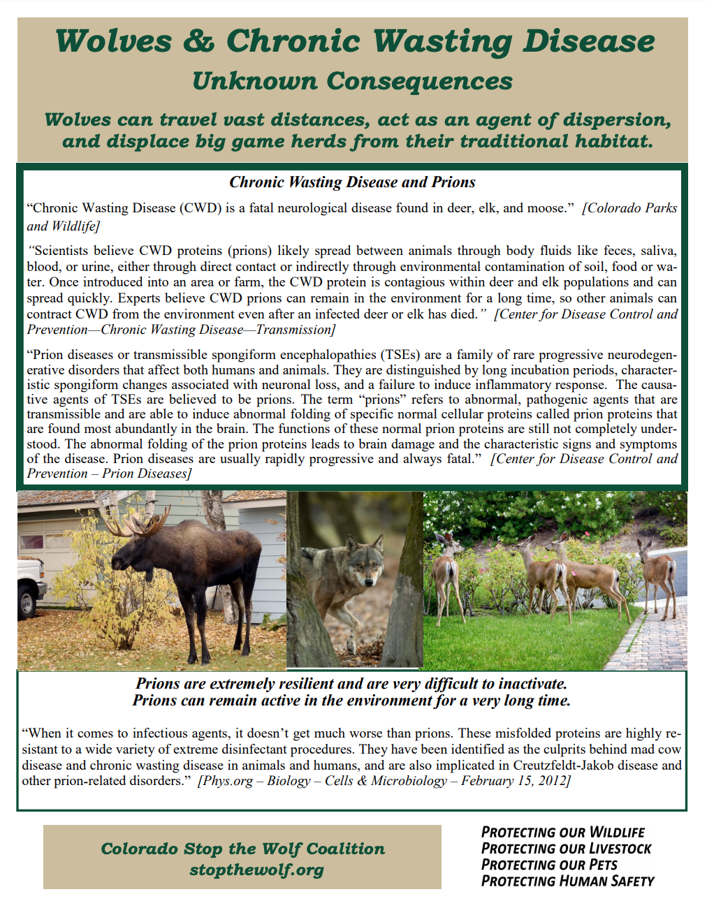 wolves and chronic wasting disease