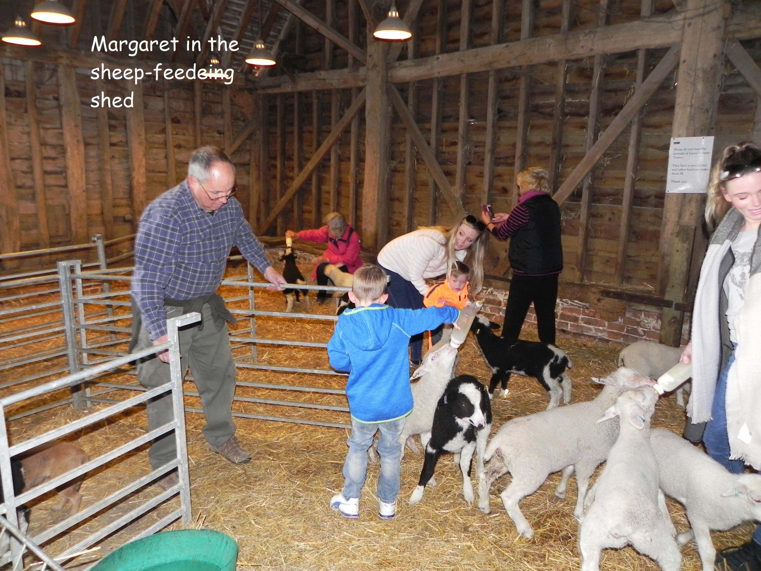 Sheep-feeding shed.jpeg