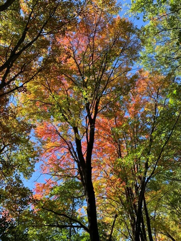 Blog post - leaves.jpg