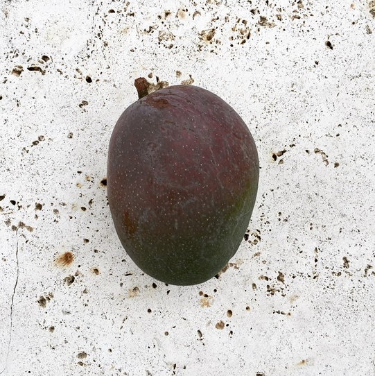 b2ap3_thumbnail_mango-from-backyard.png