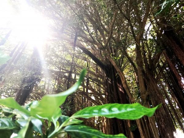 b2ap3_thumbnail_Key-West-Tropical-Forest--Botanical-Garden-3.JPG
