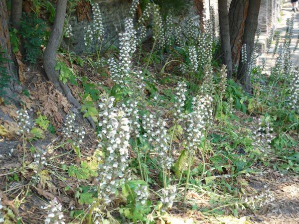 design-dictionary-acanthus-plant.jpg