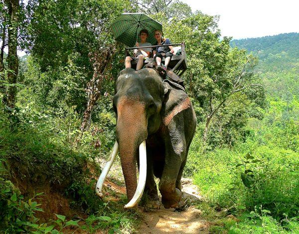 carla-stolper-son-elephant