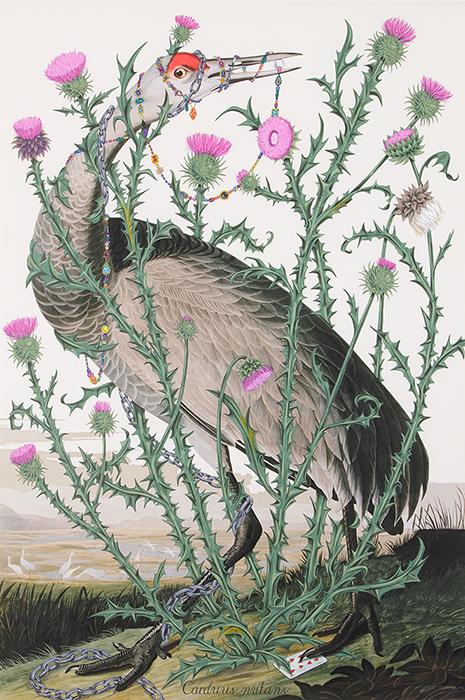 Carduus nutans Artist: Penelope Gottlieb Date of Work: 2014 Dimensions: 60 x 40