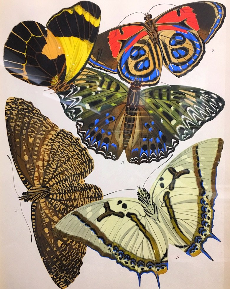 Butterlies lithograph from TEFAF 2017