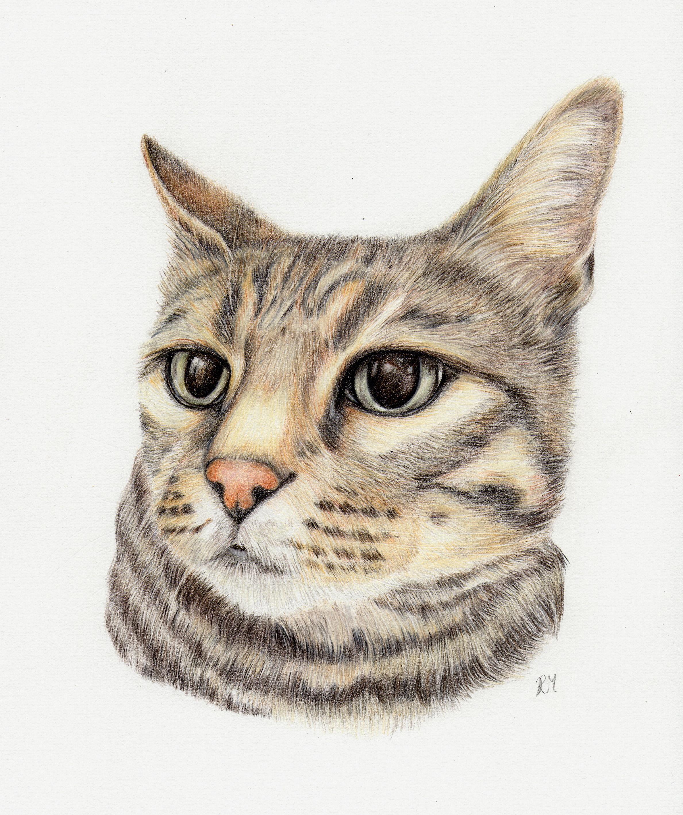 A4 Coloured Pencil Portrait, Bengal Cat.