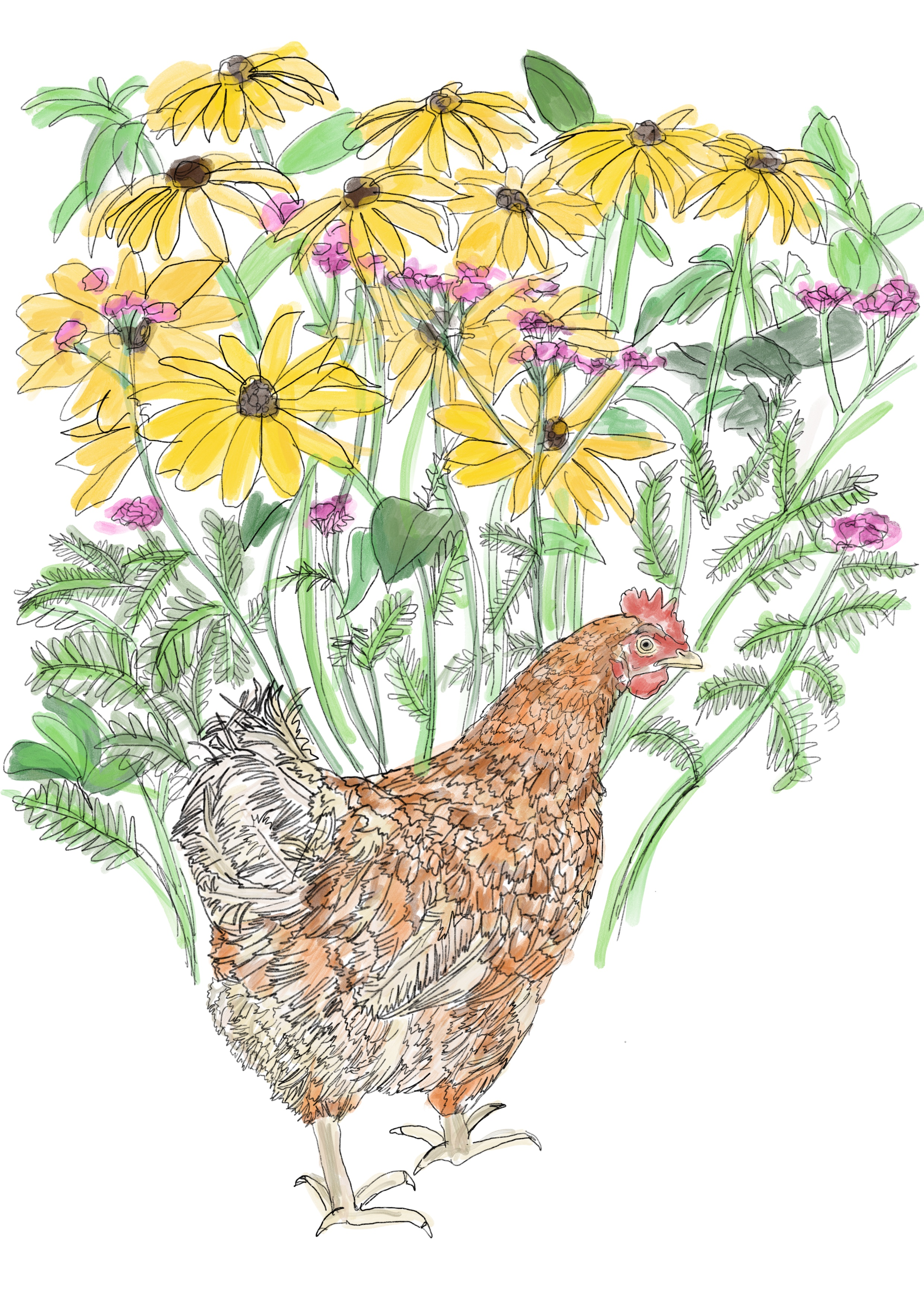 Another of Rachel's rescue Hen's, this one is called Ginger. Rachel can be found @thegoodlifeainteasy on Instagram and FB