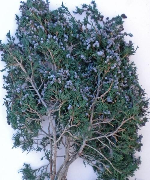 bulk branches sm.jpg