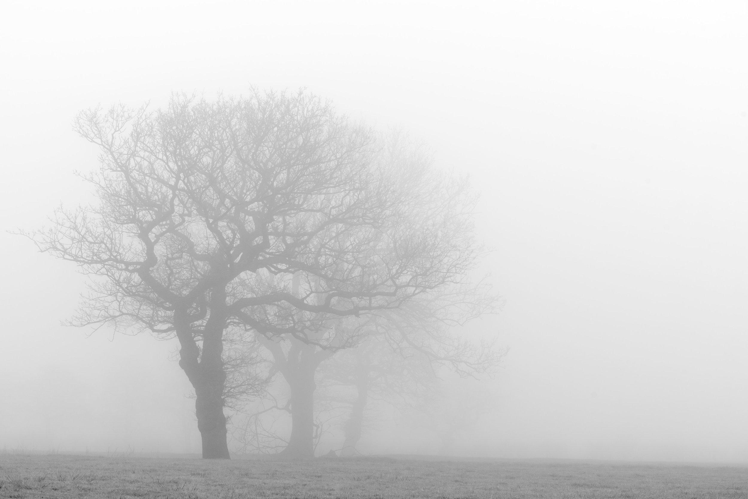 Three trees DSC_7452.jpg
