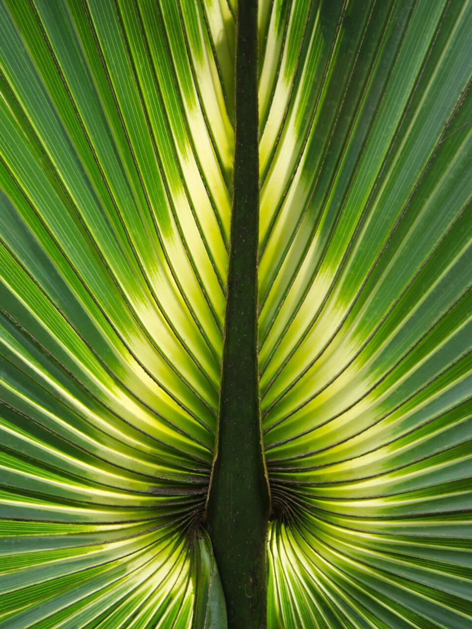 """Myakka Palm"" by Roger Leege"