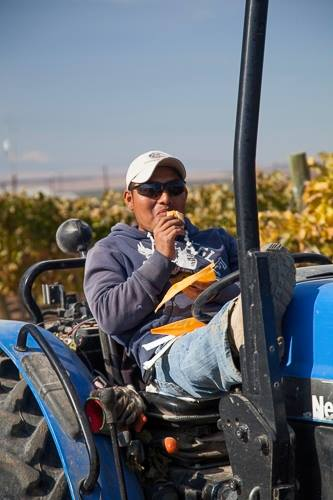 Adelfo Martinez  Adelfo started during the 2010 harvest. Adelfo's work ethic and talents quickly shined bright. He is currently learning the management side of the vineyard. Adelfo is a level two graduate of the Latino Viticultural Education program at Yakima Valley College.