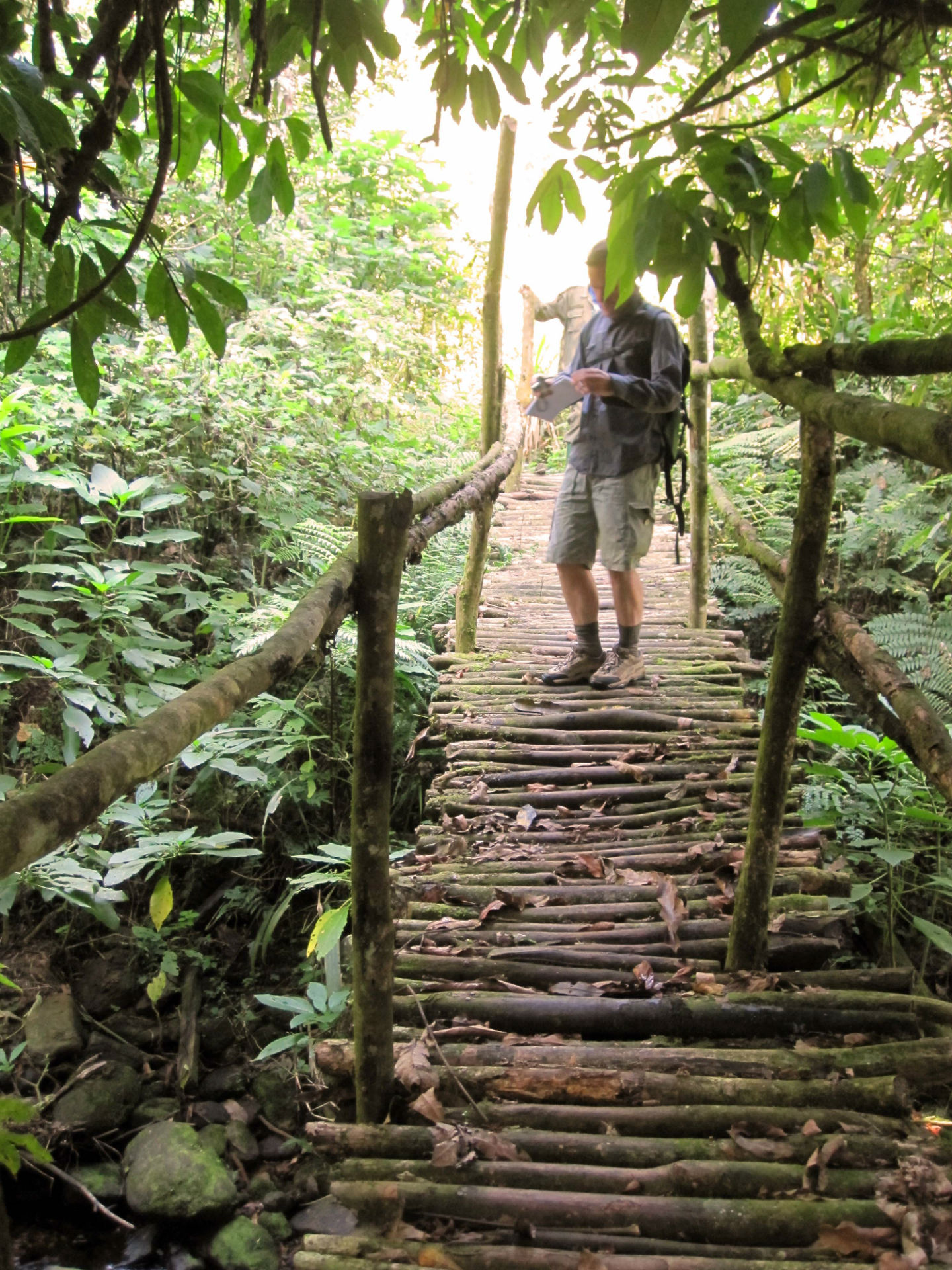 Bridge over the River, Bwindi.JPG
