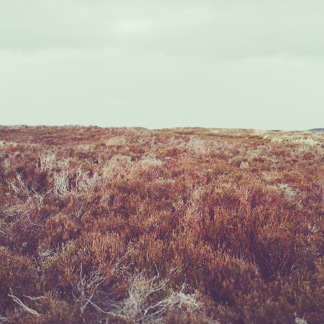 North York Moors 2.jpg