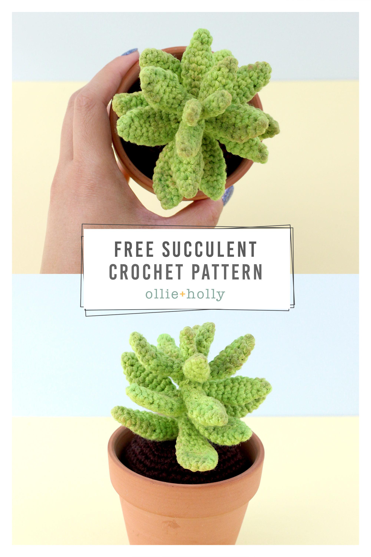 Free Sedum Adolphii Golden Glow Succulent Crochet Pattern