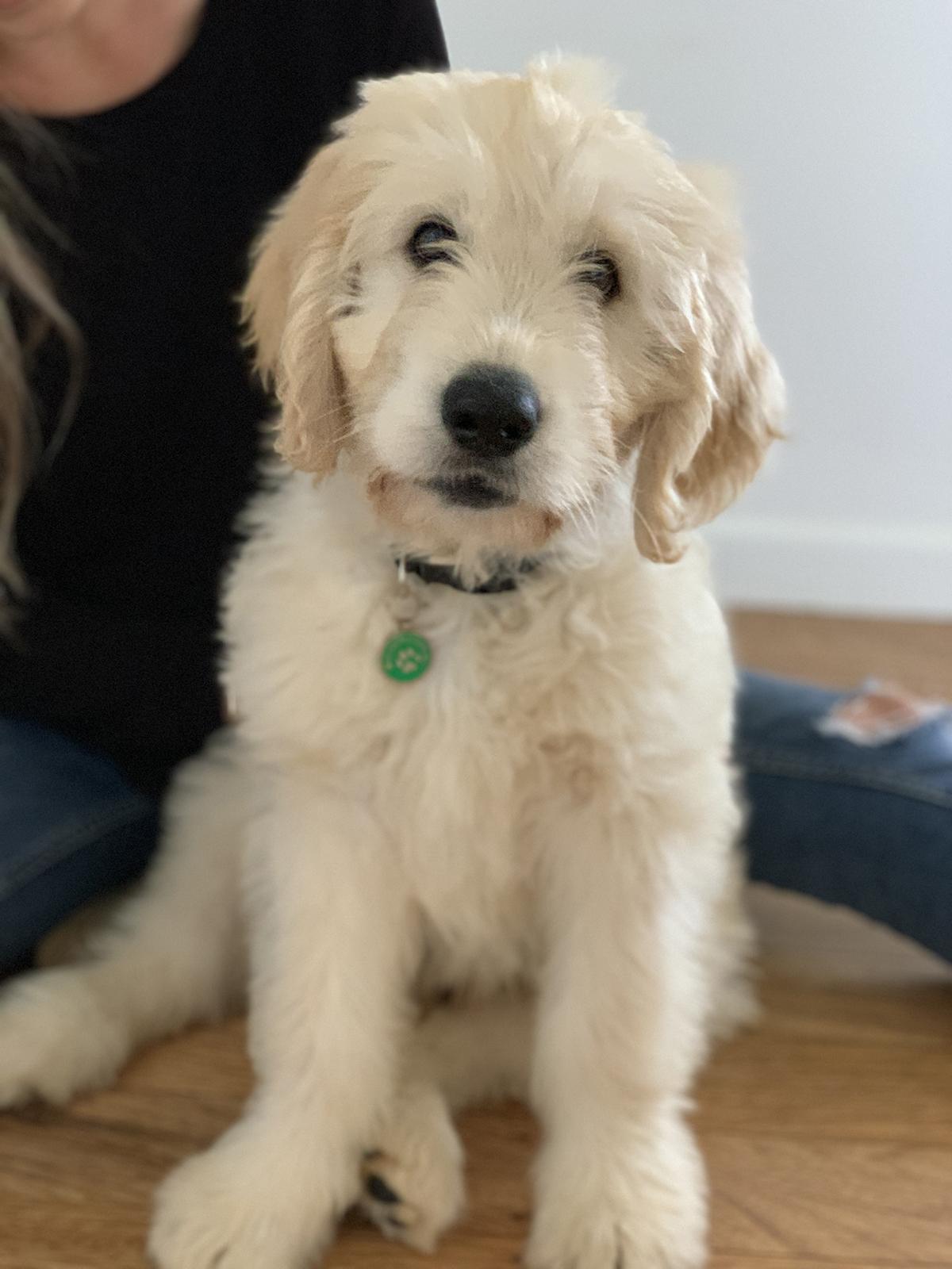Meet Colby!