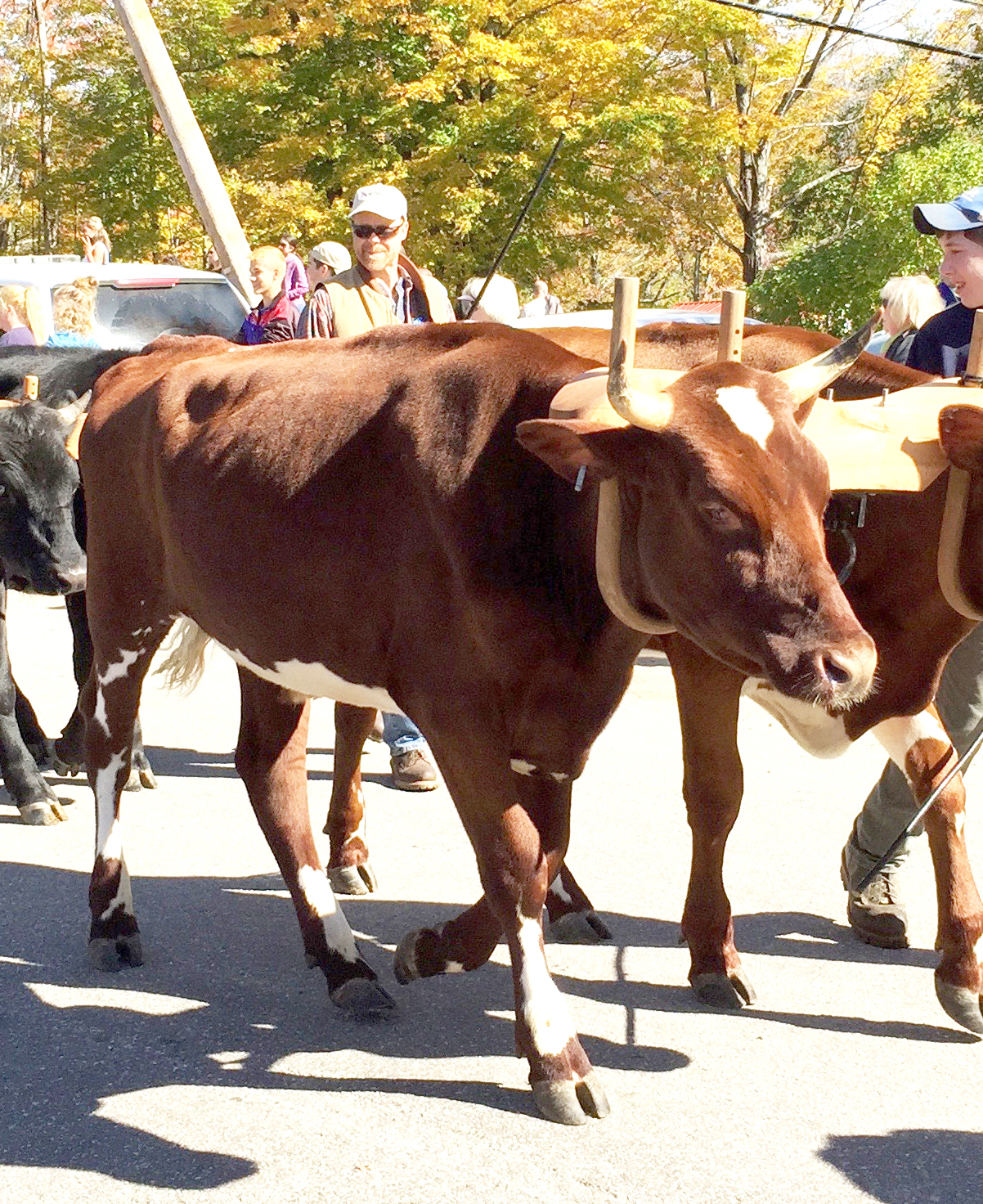 Animals are a popular part of the fair's parade