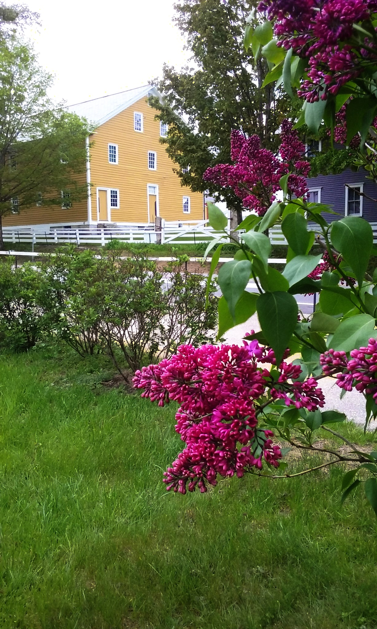 Springtime at the VIllage; courtesy photo