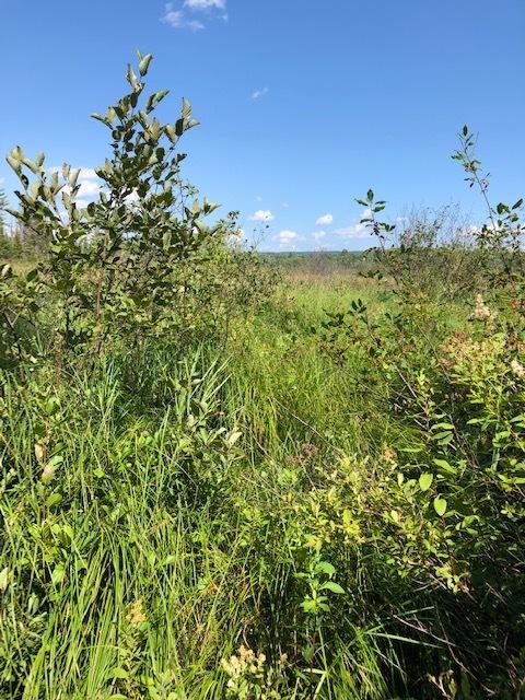 Great Meadow Wetlands