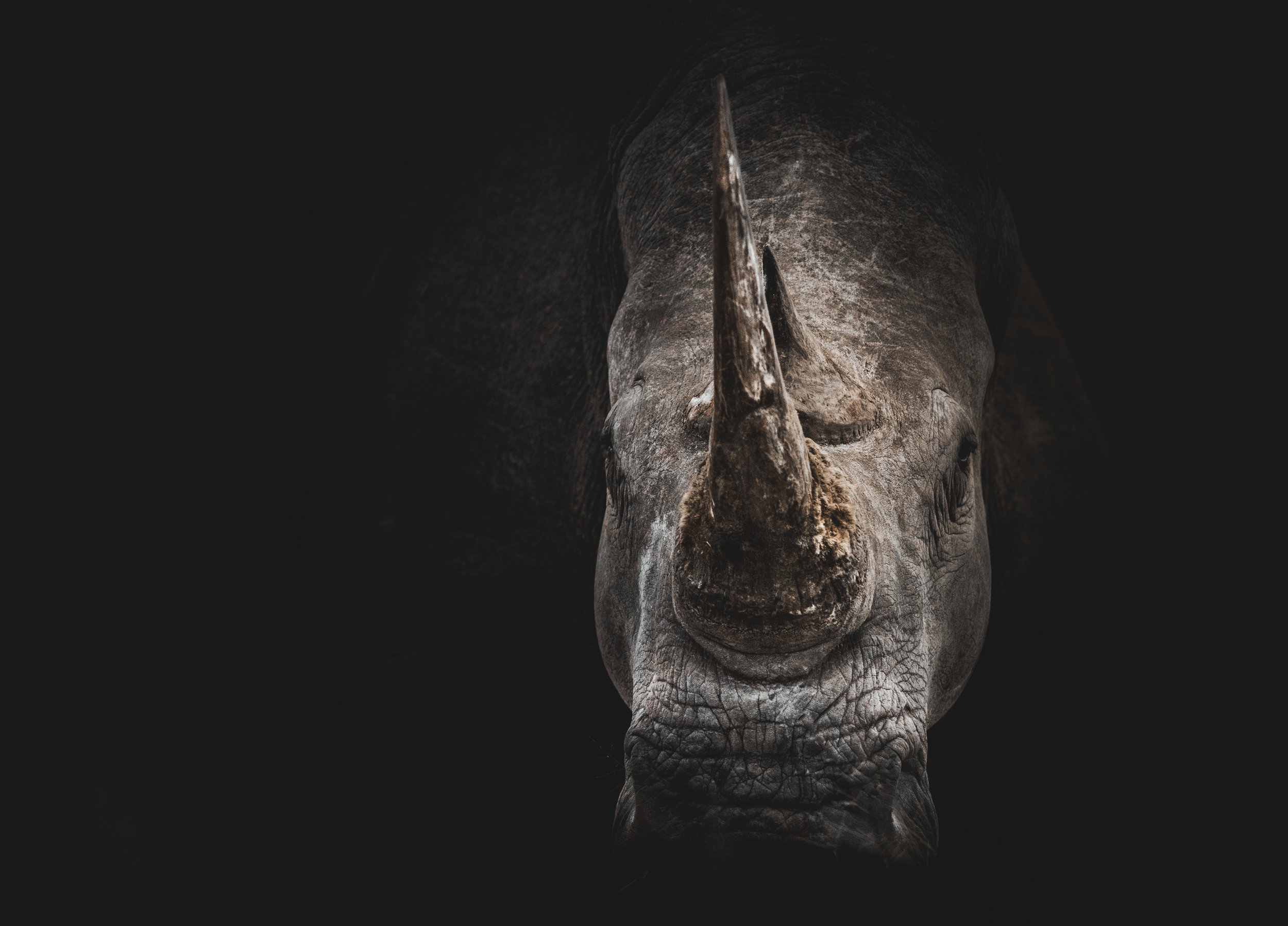 The Rhinoceros - One of nature's most powerful species, the Rhinoceros is a symbol for fortitude, confidence, and a willingness to fight if necessary; it is unafraid to challenge anything that might stand in its way. Here at Logan Legal, PA, we are happy to remind you that this strength and spirit is within you, too.