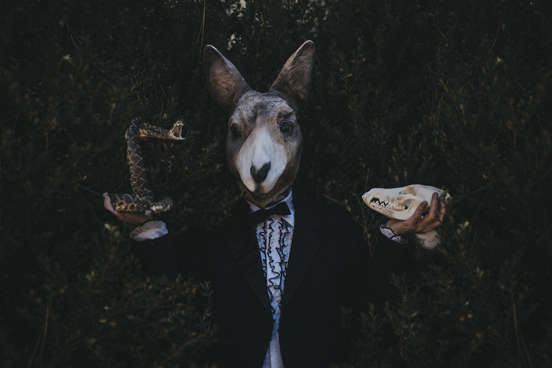 animal mask photography