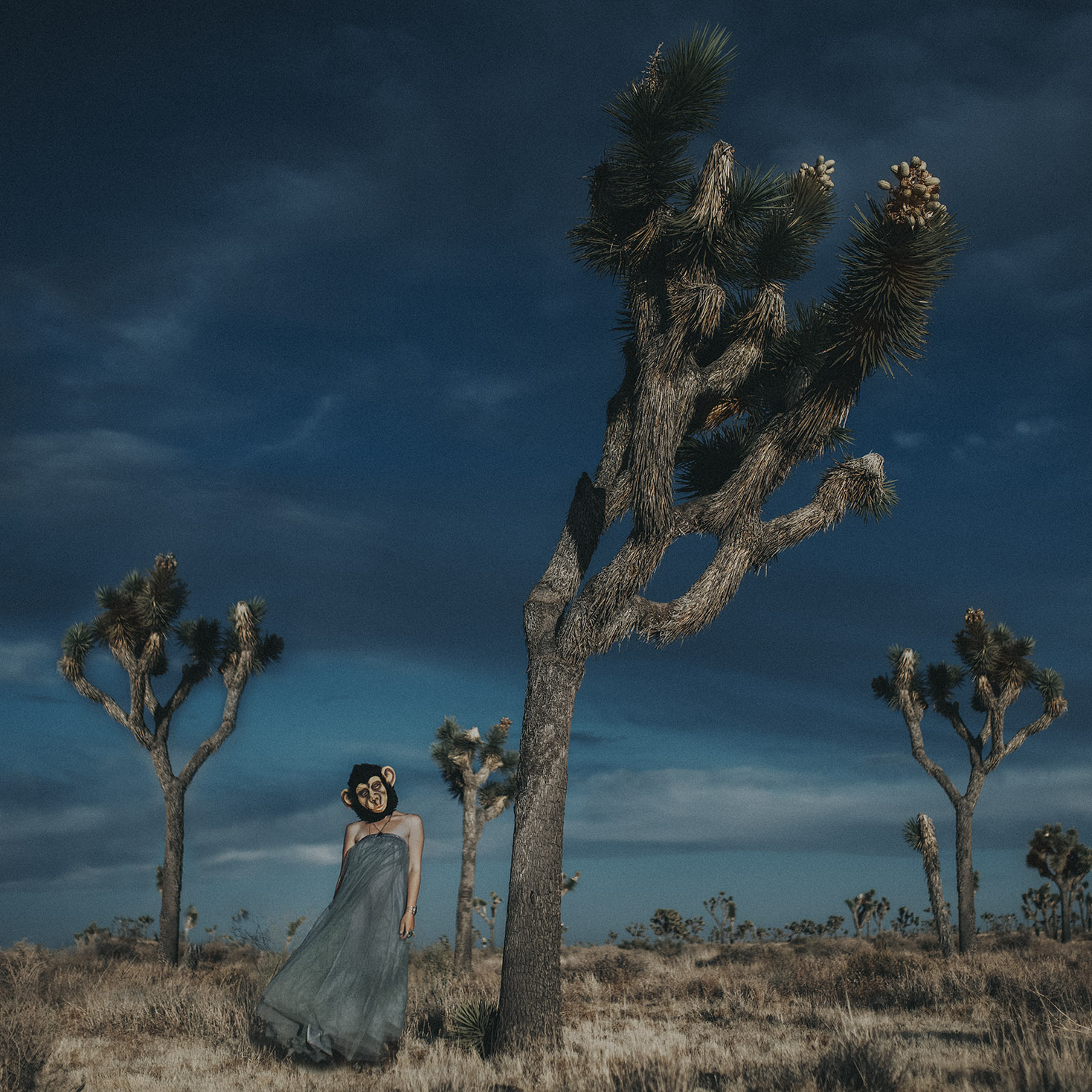 Joshua-Tree-Wedding_Photographer