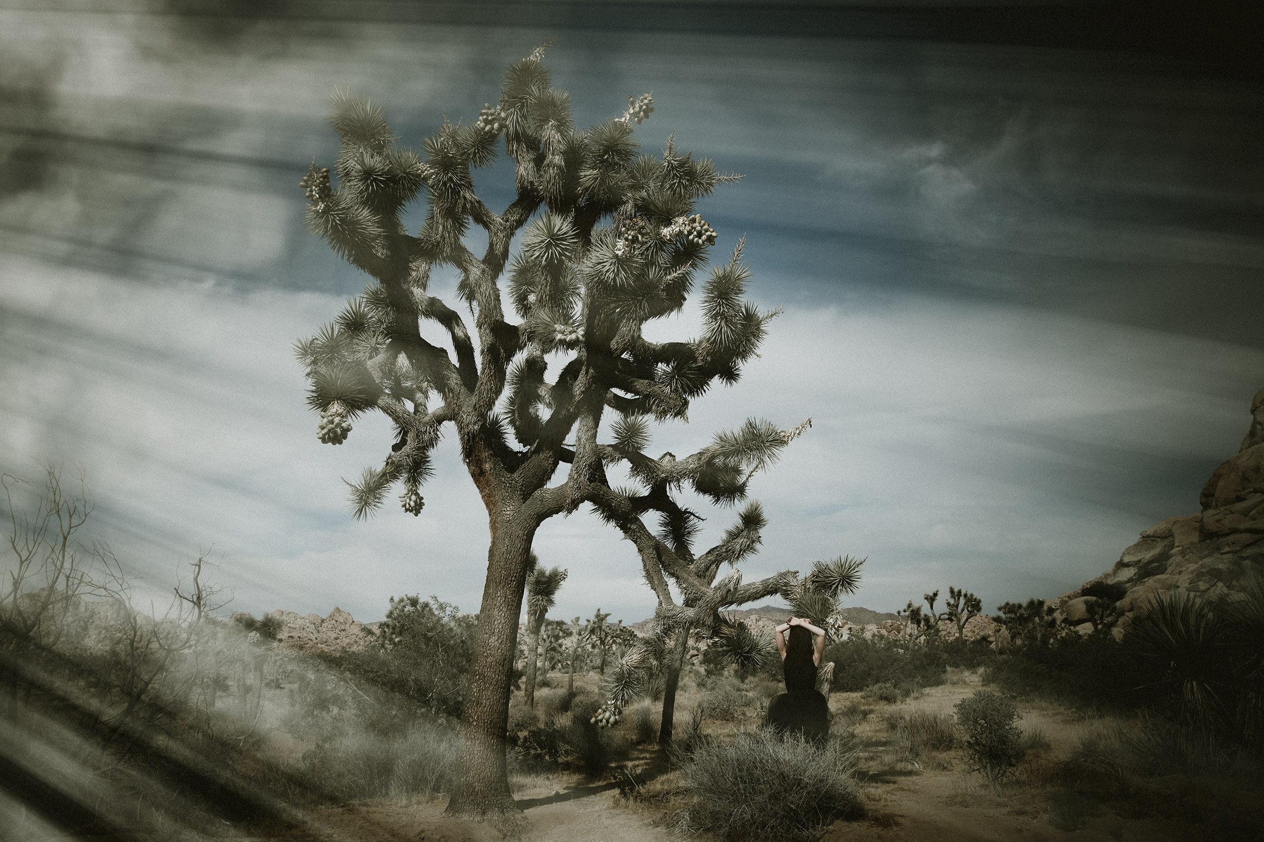 Joshua-Tree-Photographer