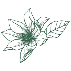 Green magnolia flower.png