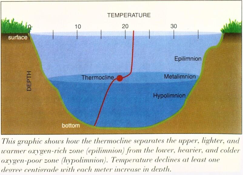 Pond - Thermocline.jpg