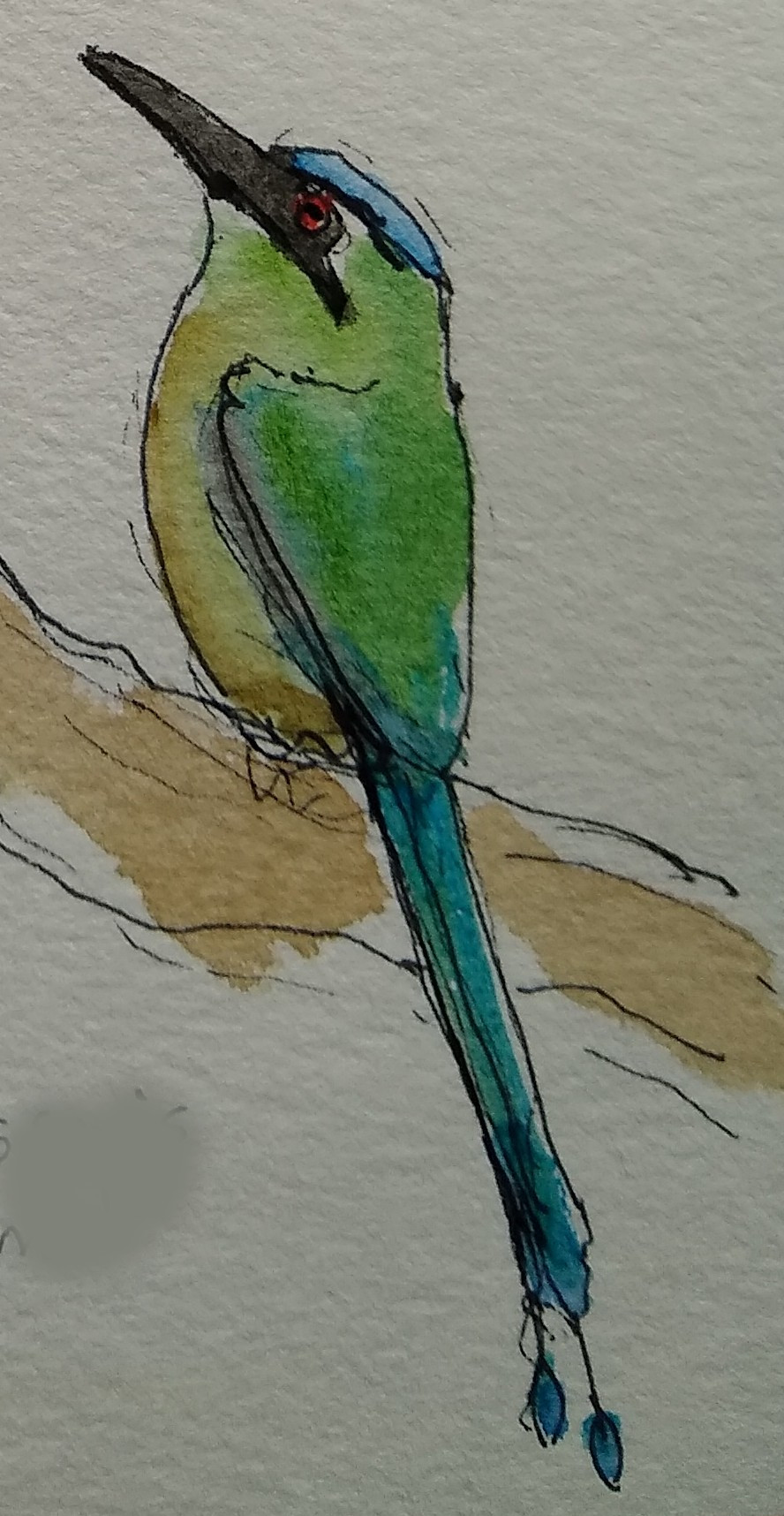Motmot sketch - Costa RIca