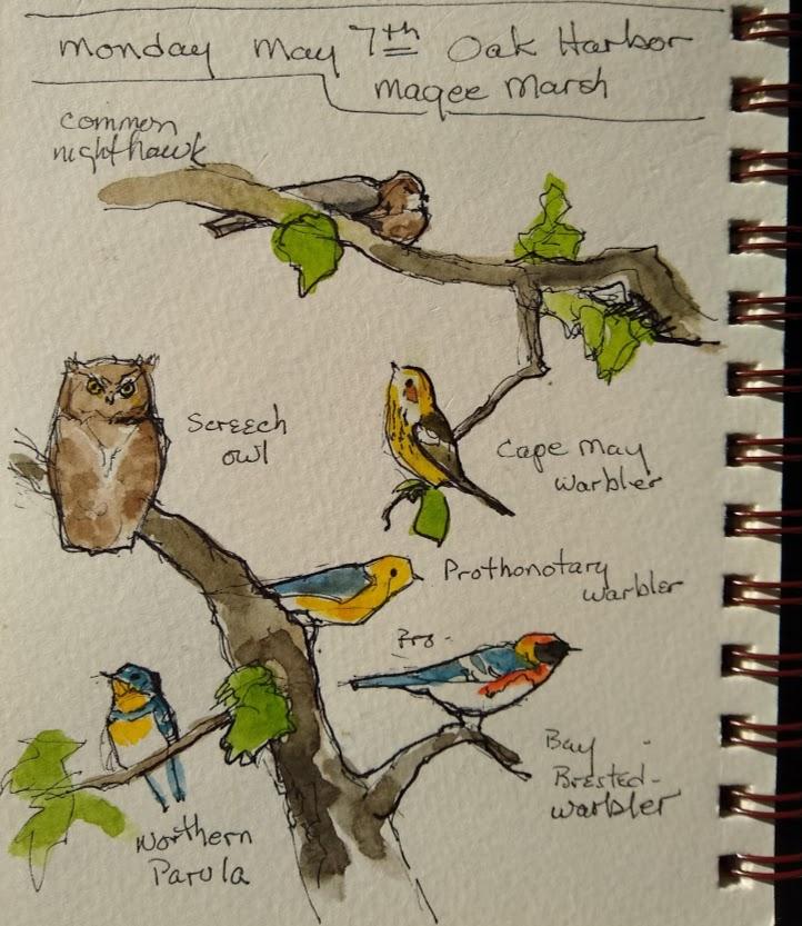warbler sketches.jpg