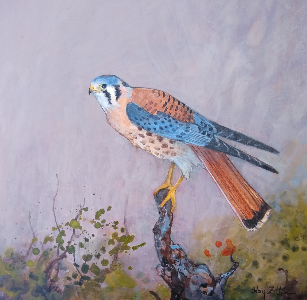 "'K is for Kestrel' 8"" x 8"" acrylic on wood panel"