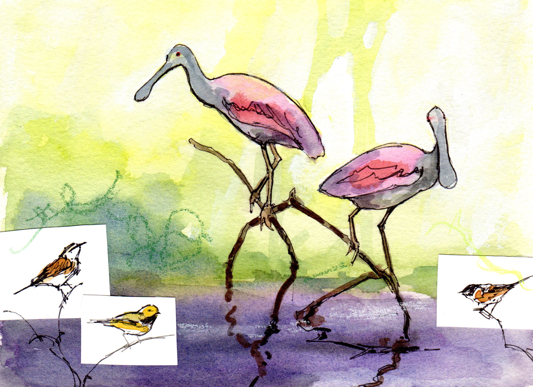 spoonbill and warbler sketch