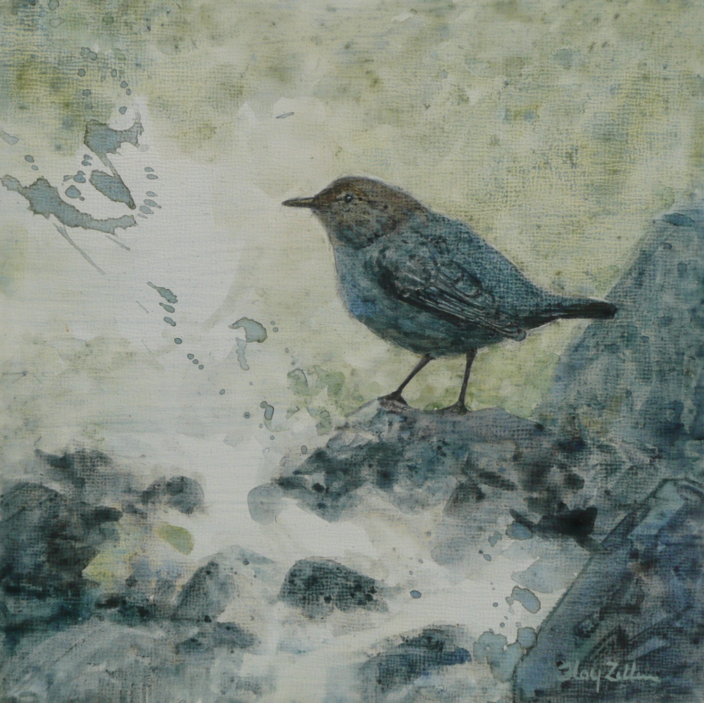 "American Dipper 6"" x 6"" watercolor on wood panel"