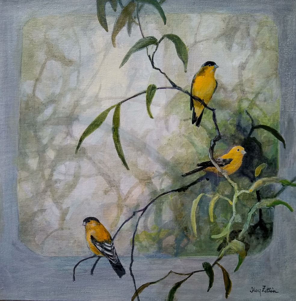 "Lesser Goldfinch 14"" x 14"" acrylic on canvas"