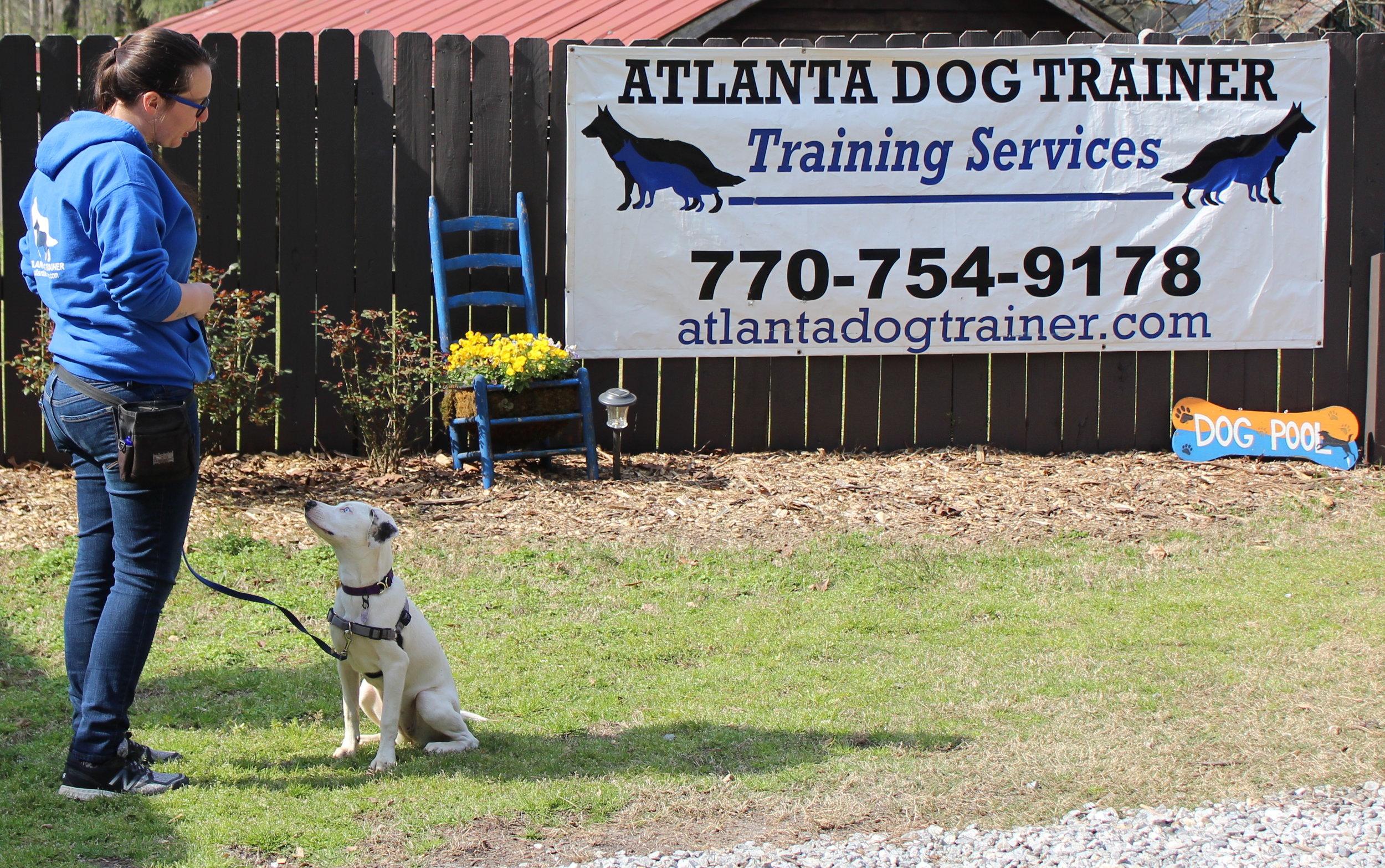 Board + Training — Atlanta Dog Trainer
