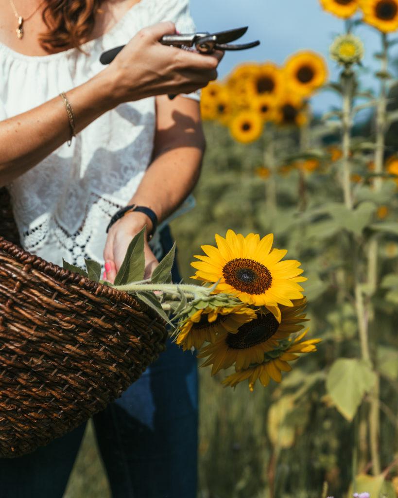 Arhaus_Sunflowers-819x1024.jpg