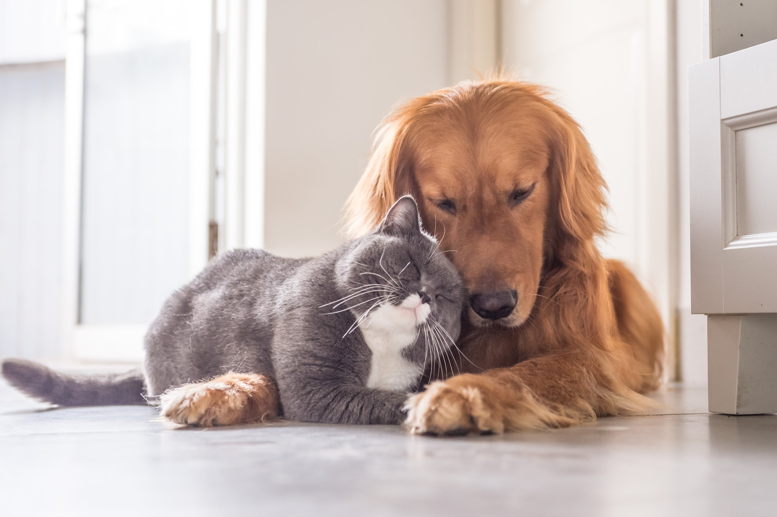 Sterilization for Cats and Dogs - Our Female Spaying and Male Neutering services are inclusive of our standard Consultation as well as Fluid Therapy. We'll also monitor vital signs such as blood pressure, oxygen saturation heart rate, respiratory rate and temperature .