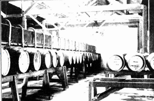 Castlemaine Brewery hogs head barrells 1927