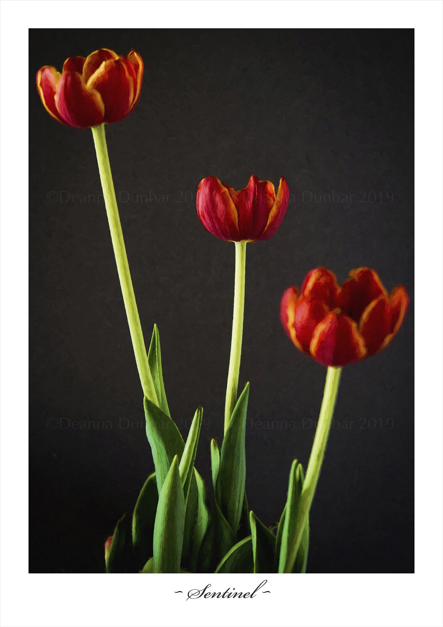 DSC_9246 Tulip-2000px-©DeanaDunbar.jpg