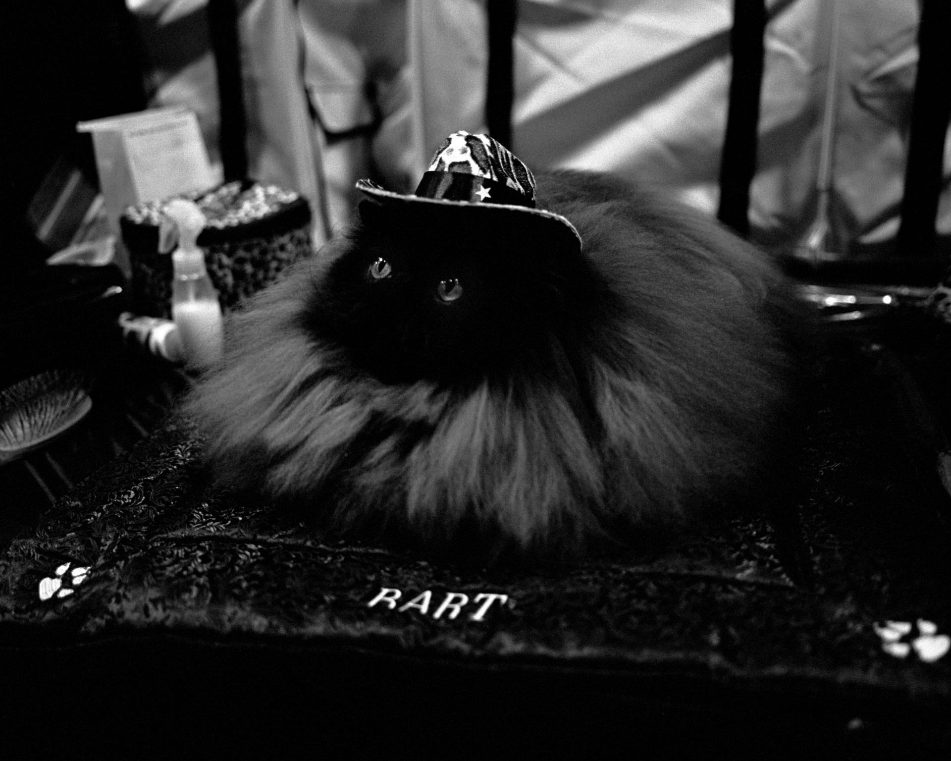 mpiepenbrink-pdx-catshow-2.jpg