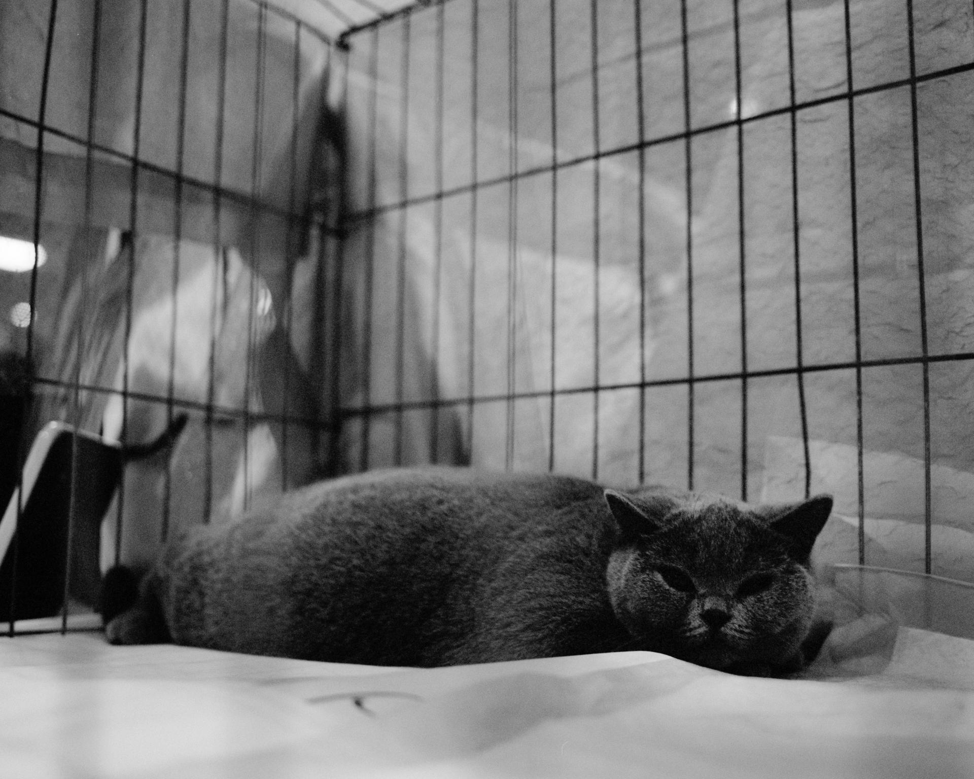 mpiepenbrink-pdx-catshow-7.jpg