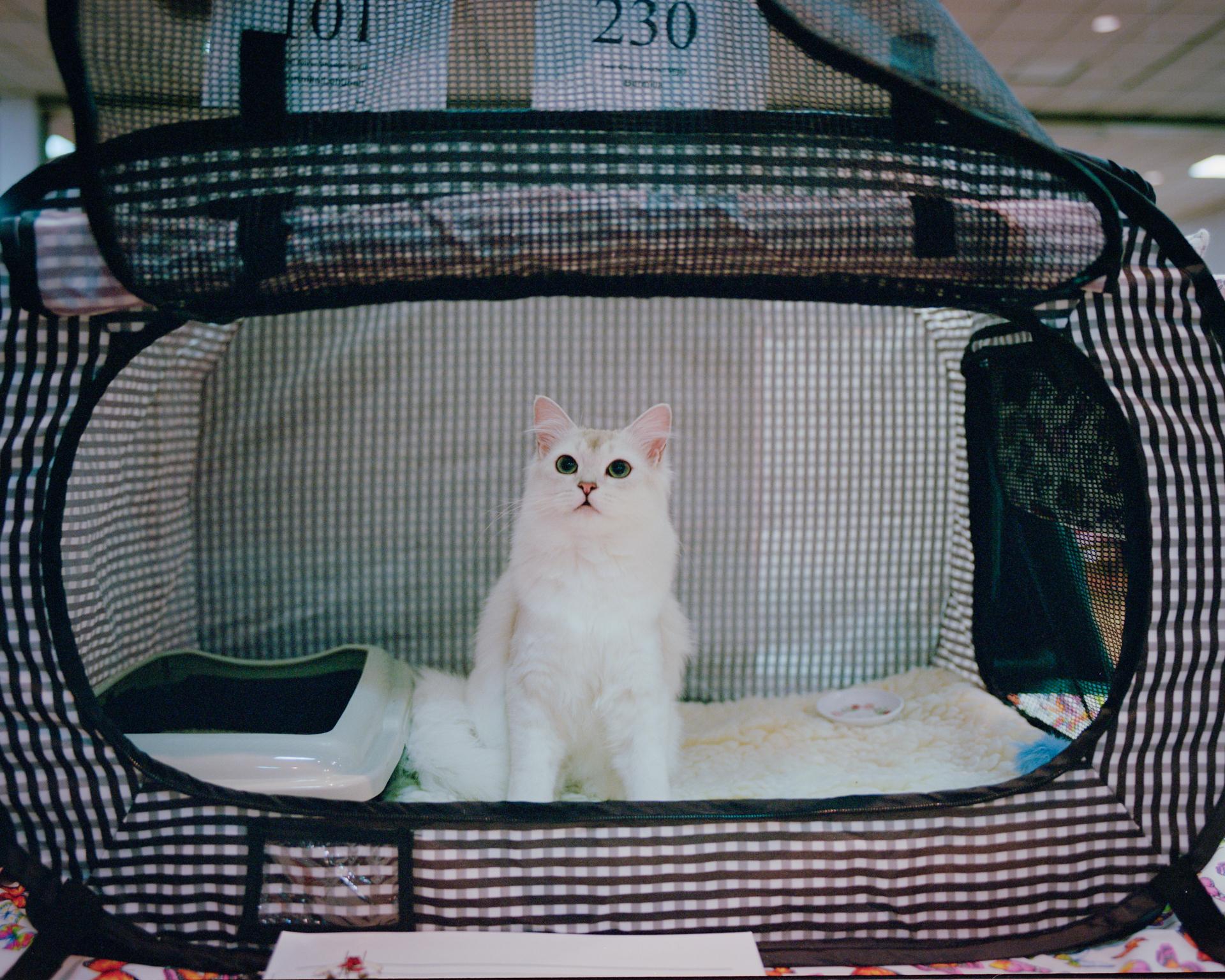 mpiepenbrink-pdx-catshow-5.jpg
