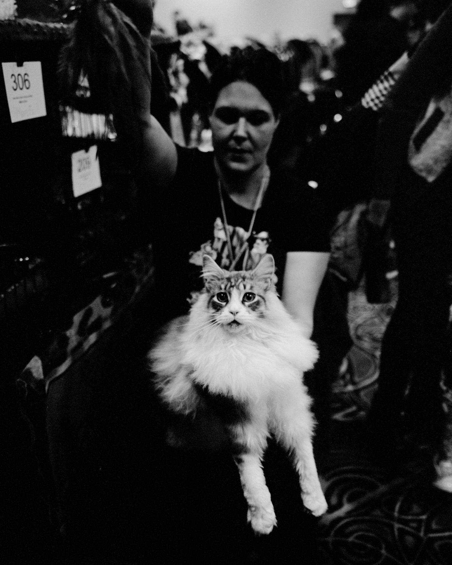 mpiepenbrink-pdx-catshow-8.jpg