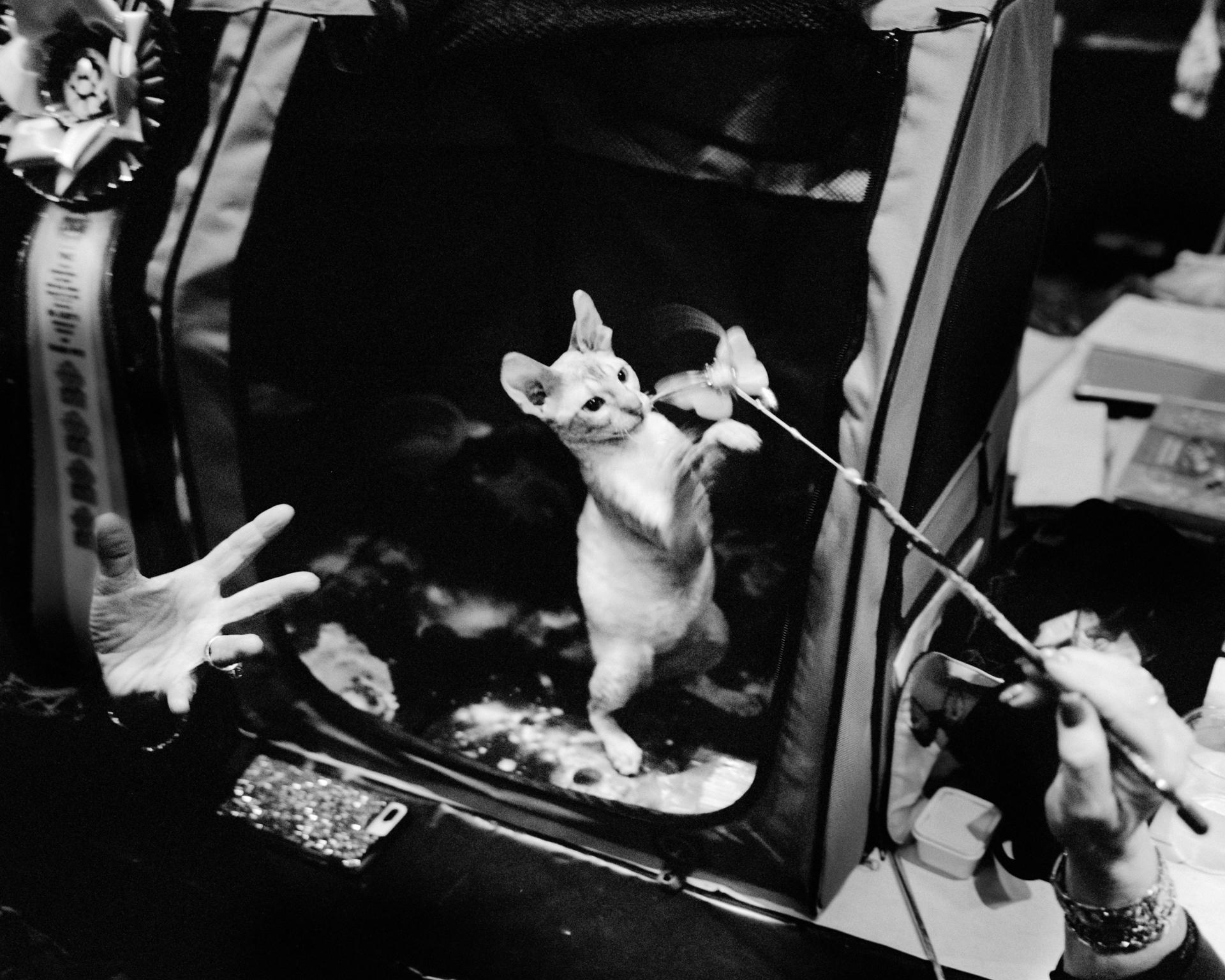 mpiepenbrink-pdx-catshow-10.jpg