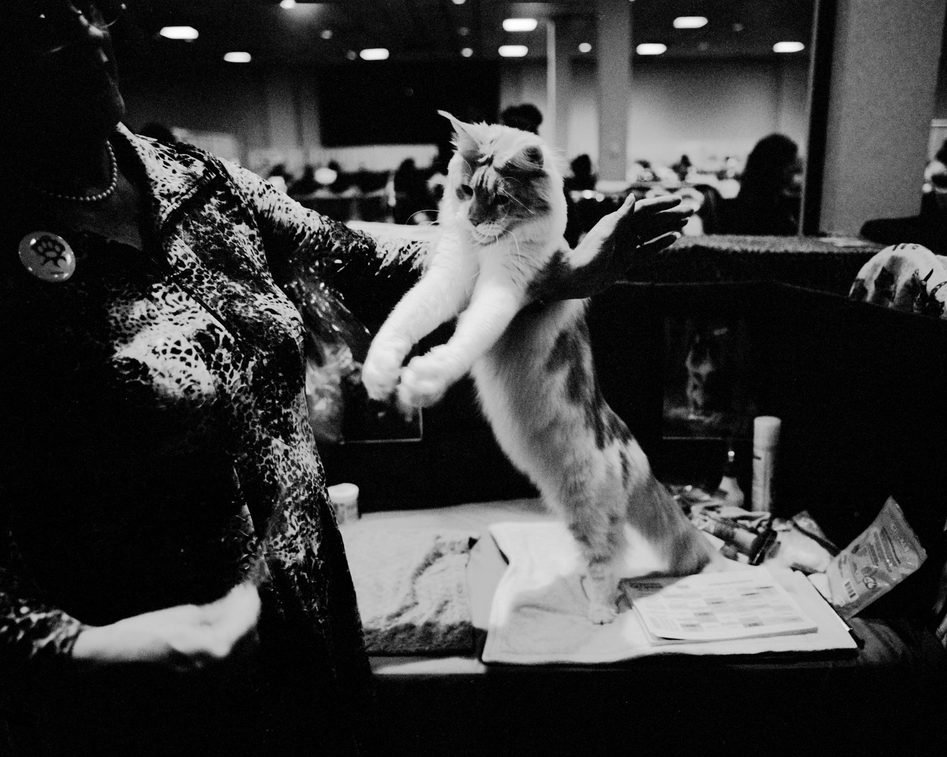 mpiepenbrink-pdx-catshow-11.jpg