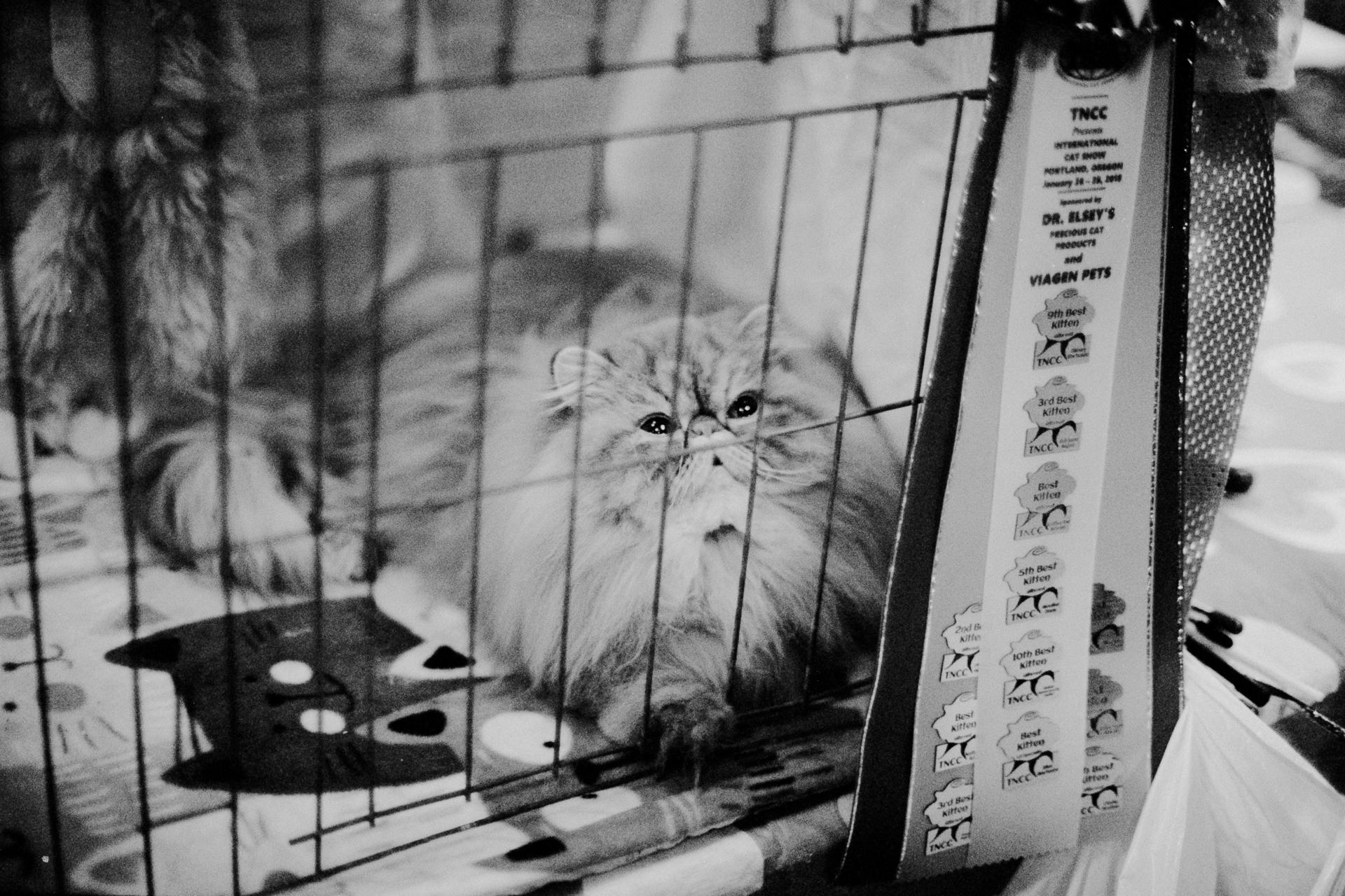 mpiepenbrink-pdx-catshow-17.jpg