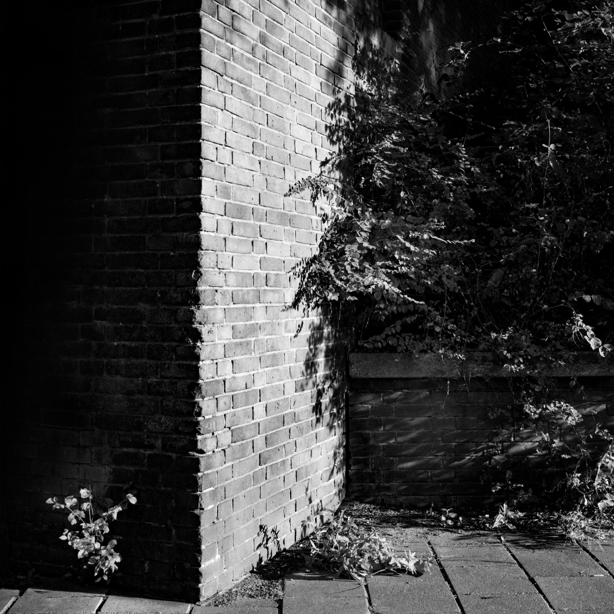 Mate - Selected Walls-9.jpg