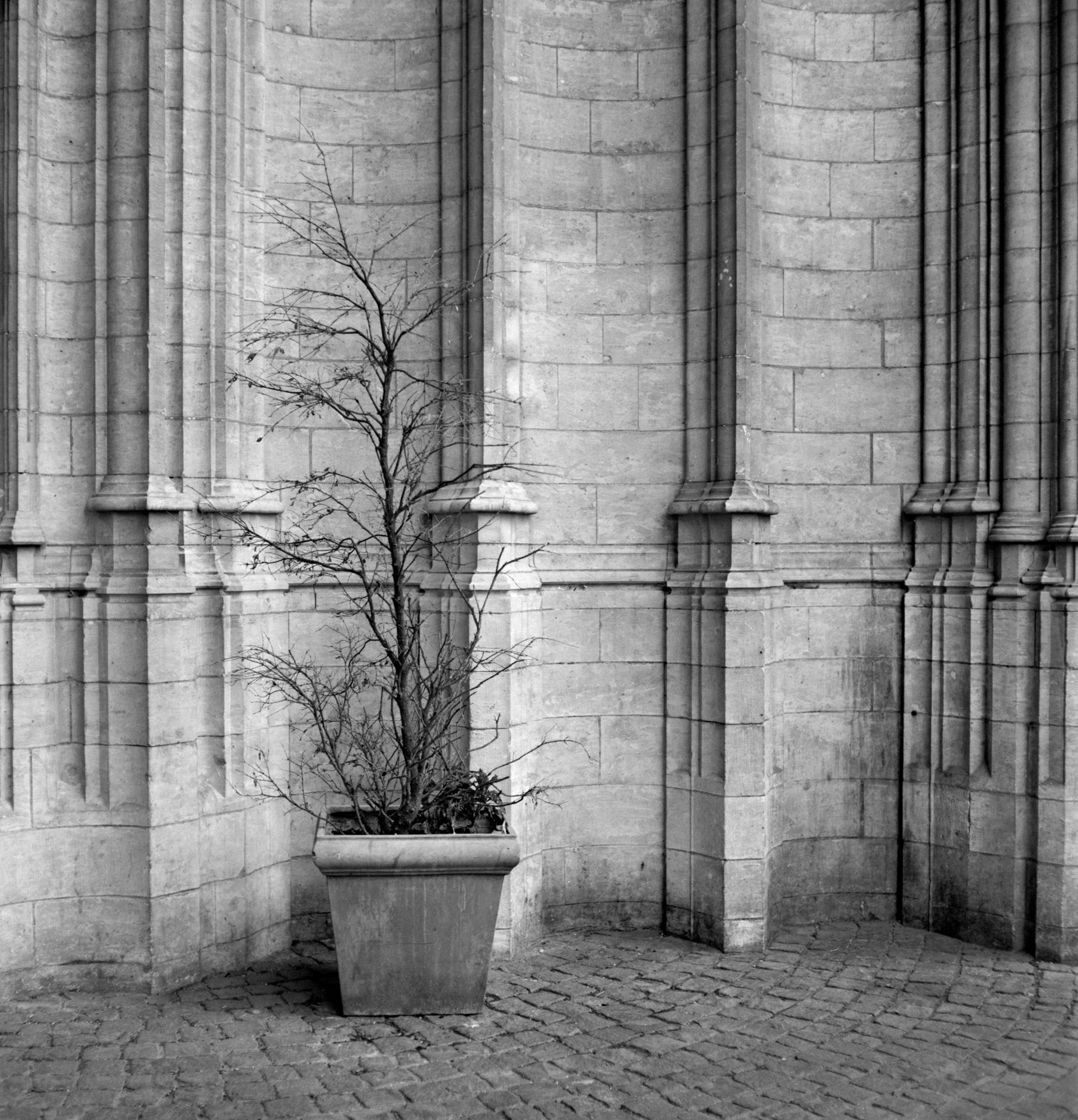 Mate - Selected Walls-10.jpg